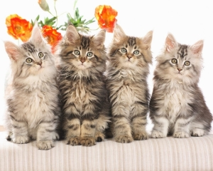 cats-wallpapers-animals-cats-cat-wallpaper